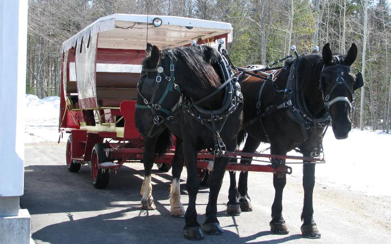 Mackinac Island horse drawn taxi