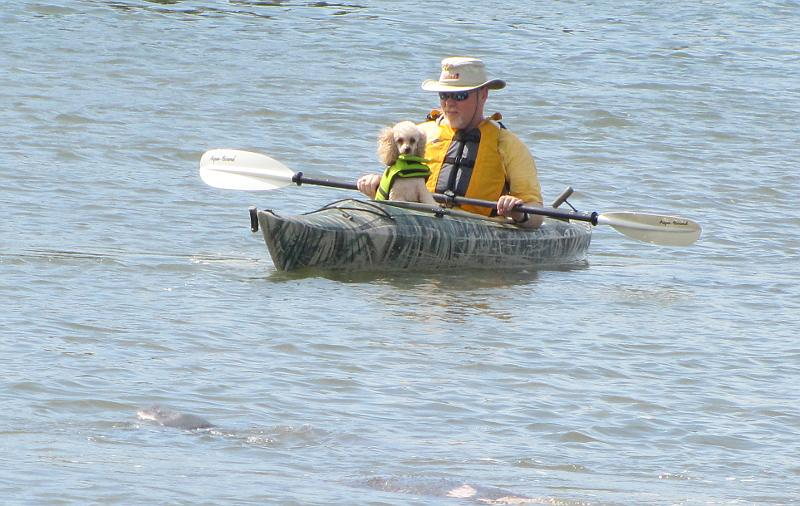 Kayaker and manatee