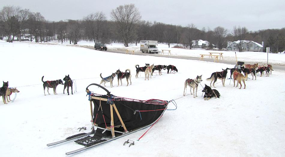 Dog sled team waiting for tour at Boyne Highalnds near Harbor Springs