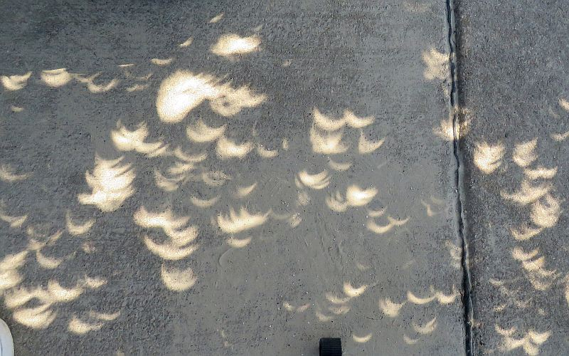 Eclipse crescents on the ground beneat a tree