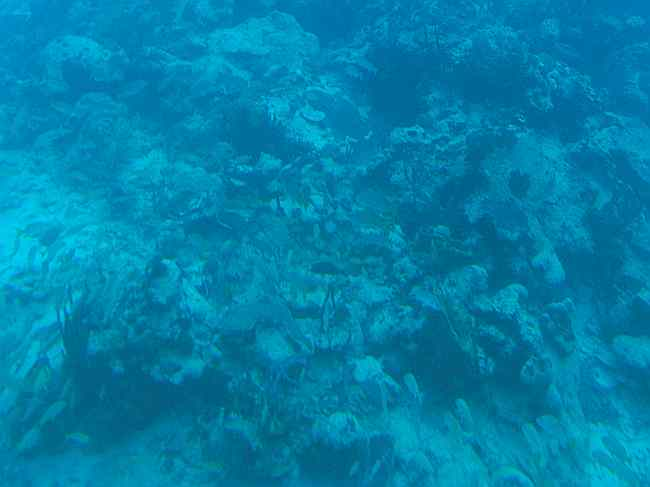 Coral reef from submarine