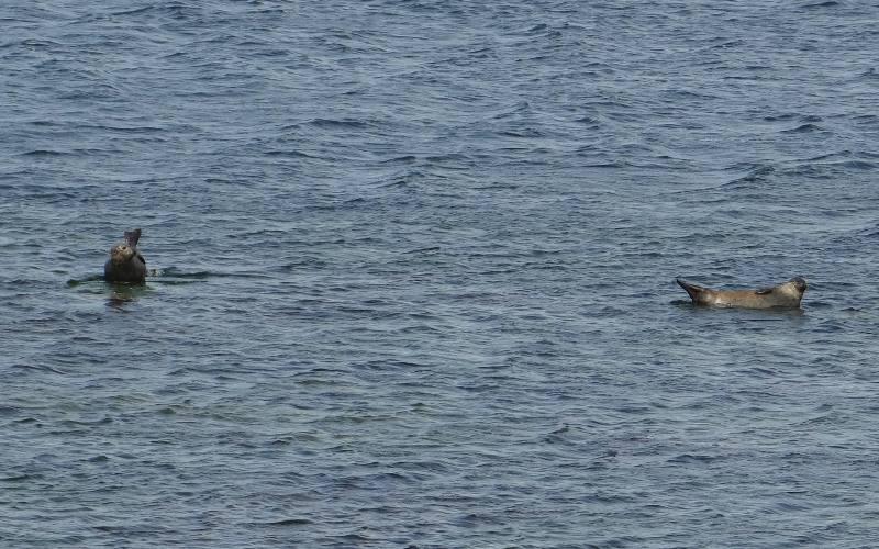 Es moreover Ireland15 moreover G 6mf83d3kmt2bg8uqcthpea0 additionally  on oscar seal colony